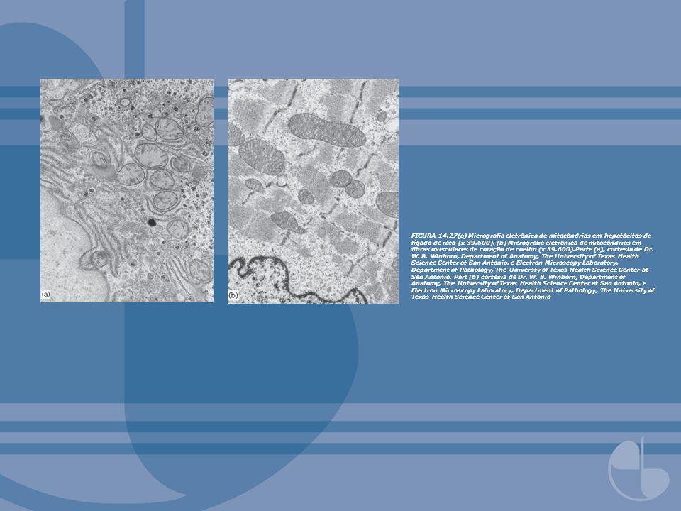 FIGURA 14.53Evidência experimental da rotação das subunidades e c.