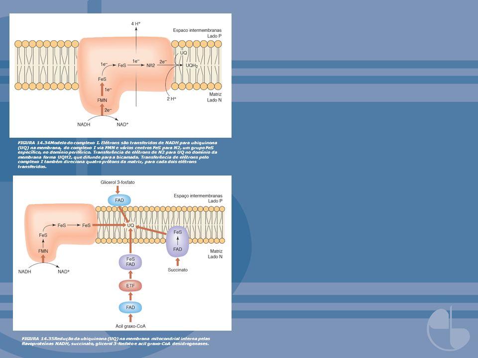 FIGURA 14.34Modelo do complexo I. Elétrons são transferidos de NADH para ubiquinona (UQ) na membrana, do complexo I via FMN e vários centros FeS para