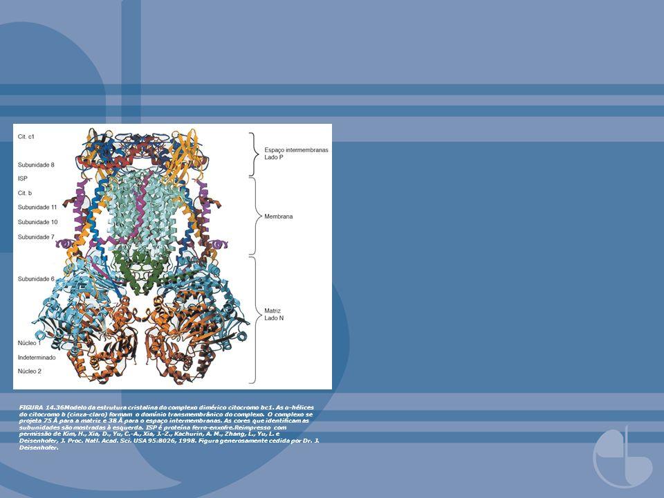 FIGURA 13.12Neurotransmissores excitatórios versus inibitórios como agonistas para receptores canais iônicos ligante-dependentes. FIGURA 14.36Modelo d