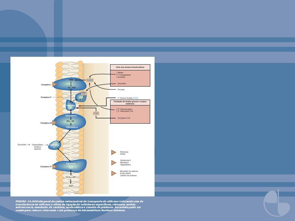 FIGURA 14.44Visão geral da cadeia mitocondrial de transporte de elétrons indicando vias de transferência de elétrons e sítios de ligação de inibidores