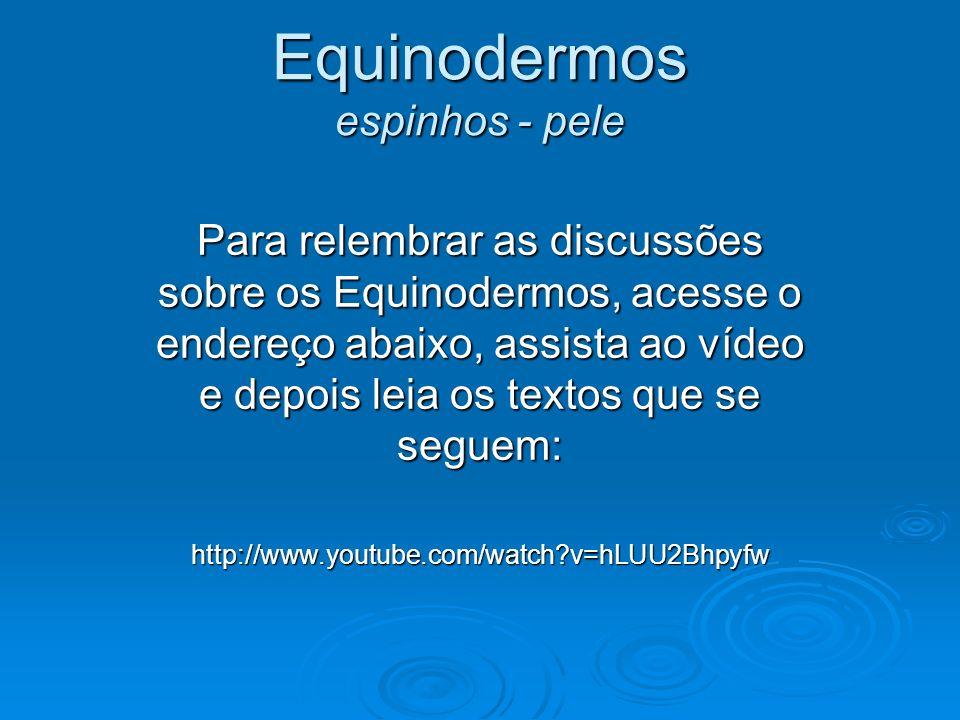 Equinodermos espinhos - pele Para relembrar as discussões sobre os Equinodermos, acesse o endereço abaixo, assista ao vídeo e depois leia os textos qu