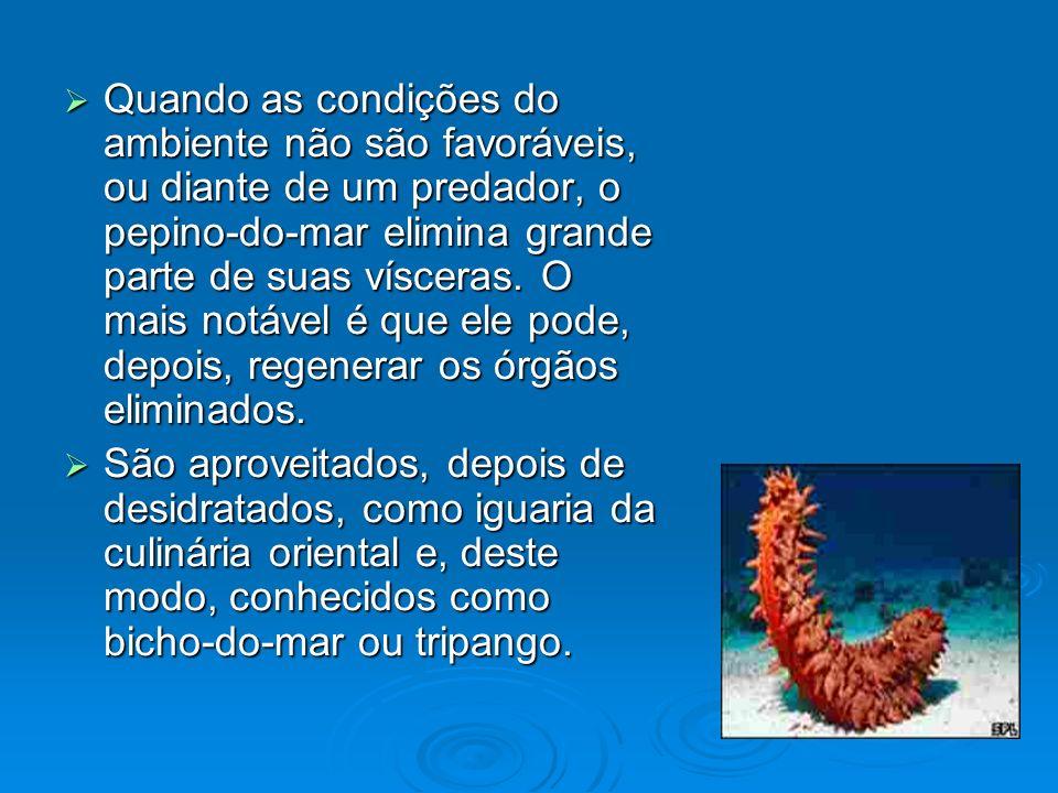 Quando as condições do ambiente não são favoráveis, ou diante de um predador, o pepino-do-mar elimina grande parte de suas vísceras. O mais notável é