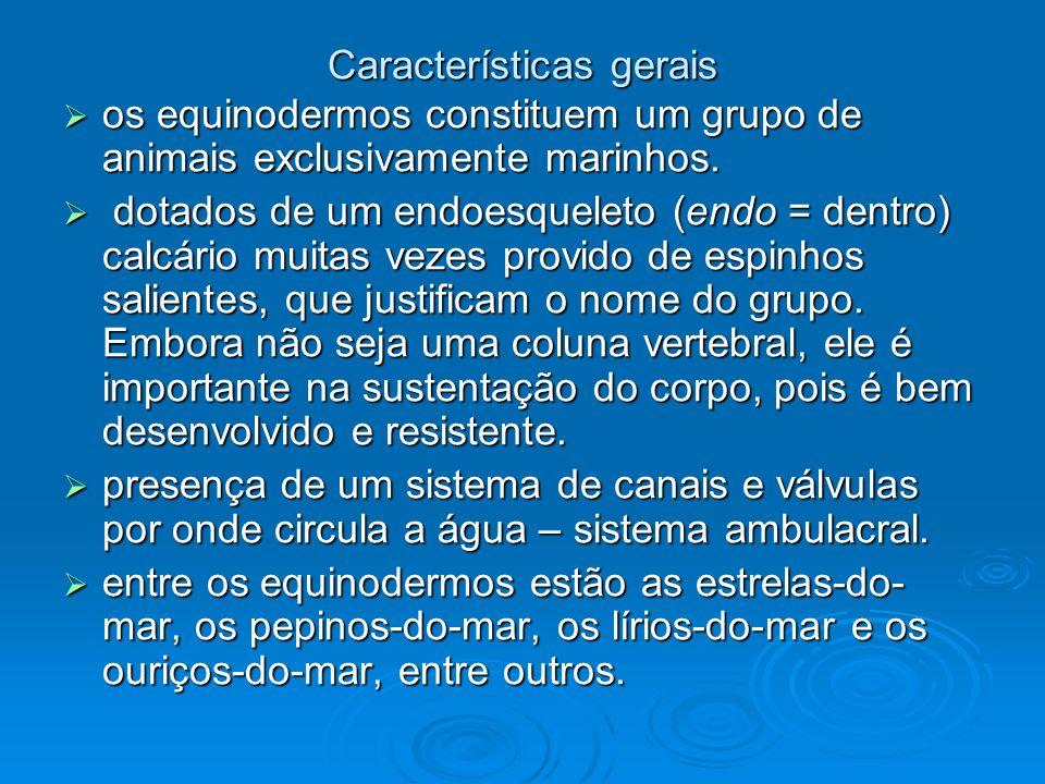 Características gerais os equinodermos constituem um grupo de animais exclusivamente marinhos. os equinodermos constituem um grupo de animais exclusiv