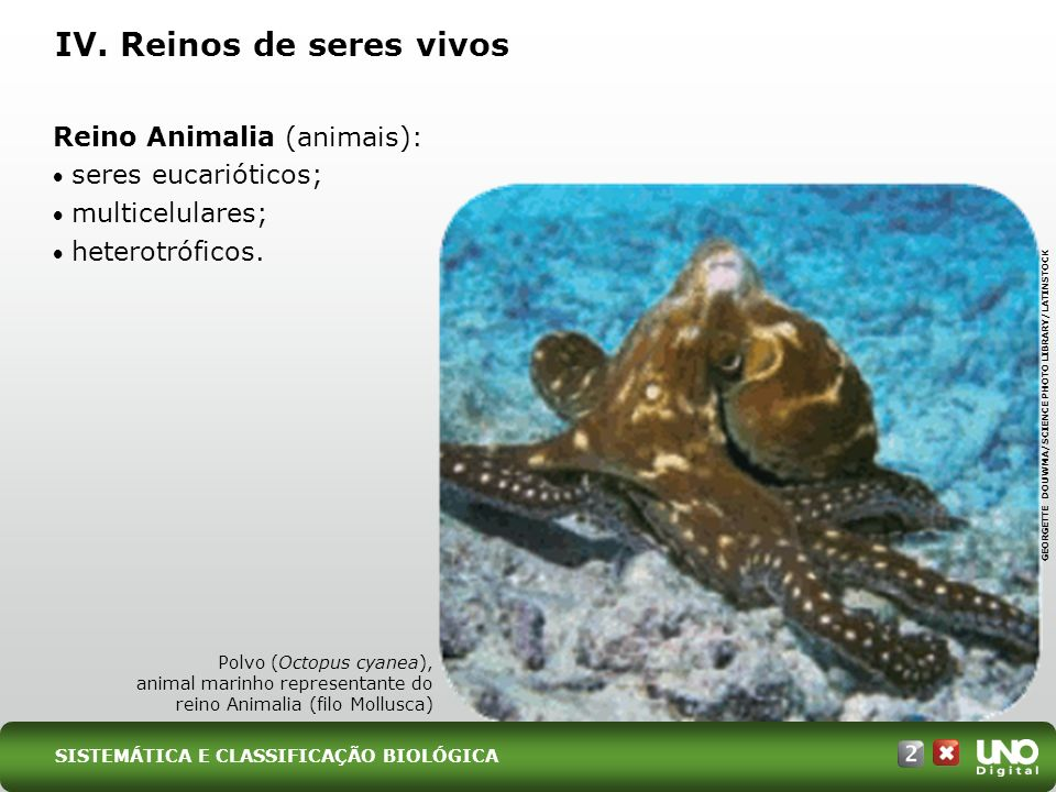 Reino Animalia (animais): seres eucarióticos; multicelulares; heterotróficos. IV. Reinos de seres vivos Polvo (Octopus cyanea), animal marinho represe