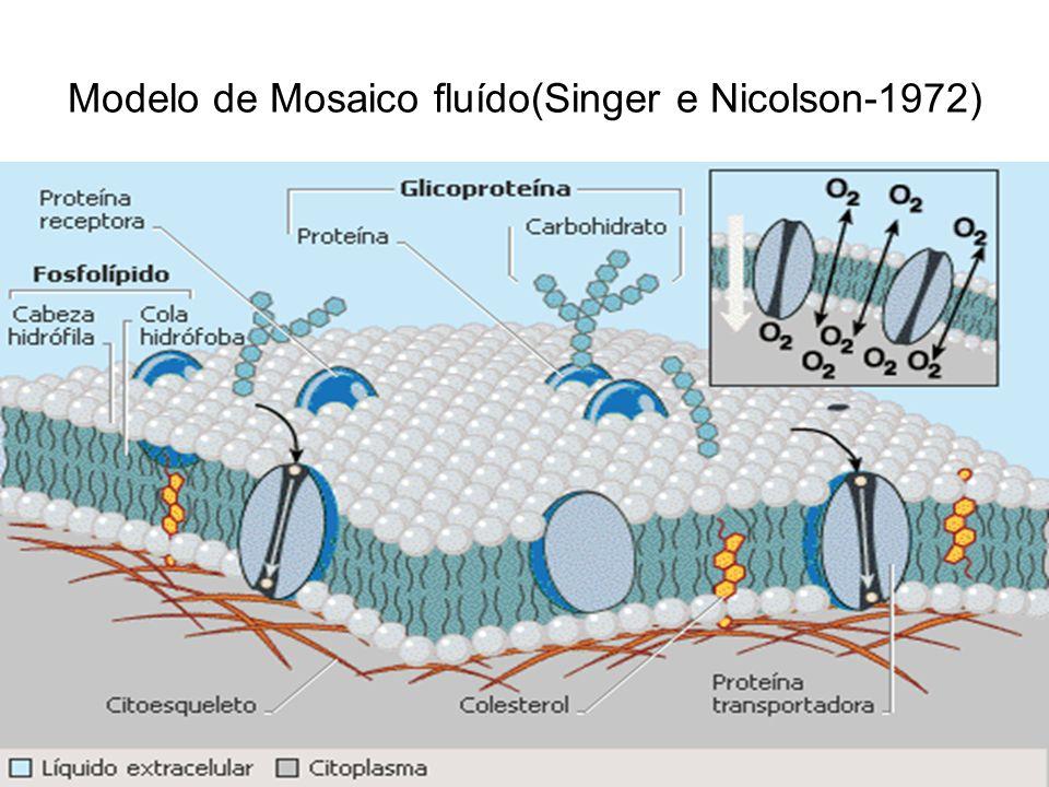Modelo de Mosaico fluído(Singer e Nicolson-1972)
