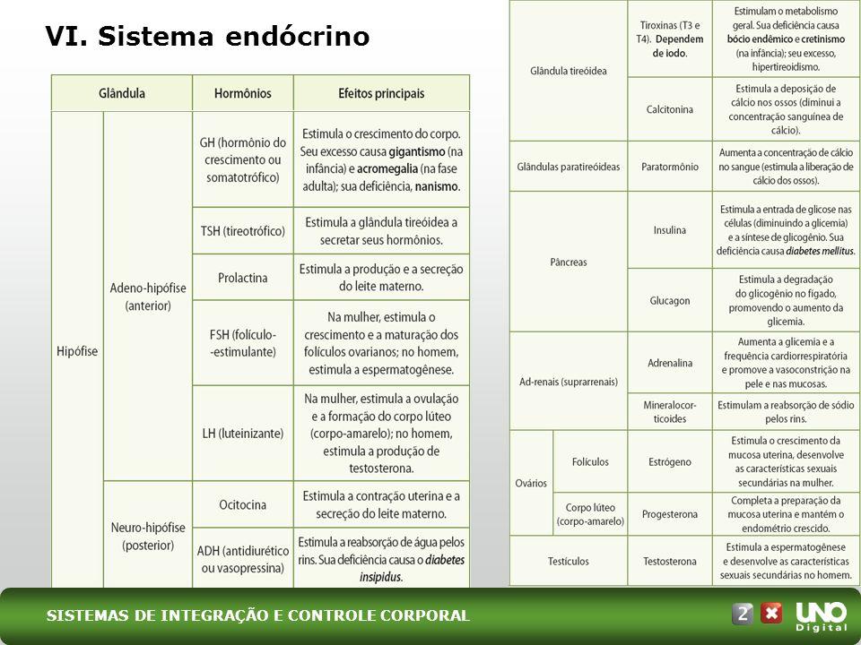 VI. Sistema endócrino SISTEMAS DE INTEGRAÇÃO E CONTROLE CORPORAL