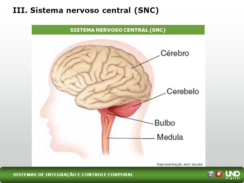 III. Sistema nervoso central (SNC) SISTEMA NERVOSO CENTRAL (SNC) Representação sem escala SISTEMAS DE INTEGRAÇÃO E CONTROLE CORPORAL