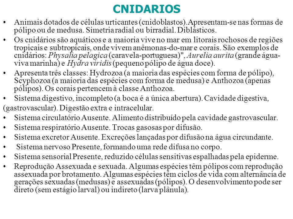CNIDARIOS Animais dotados de células urticantes (cnidoblastos).Apresentam-se nas formas de pólipo ou de medusa. Simetria radial ou birradial. Diblásti