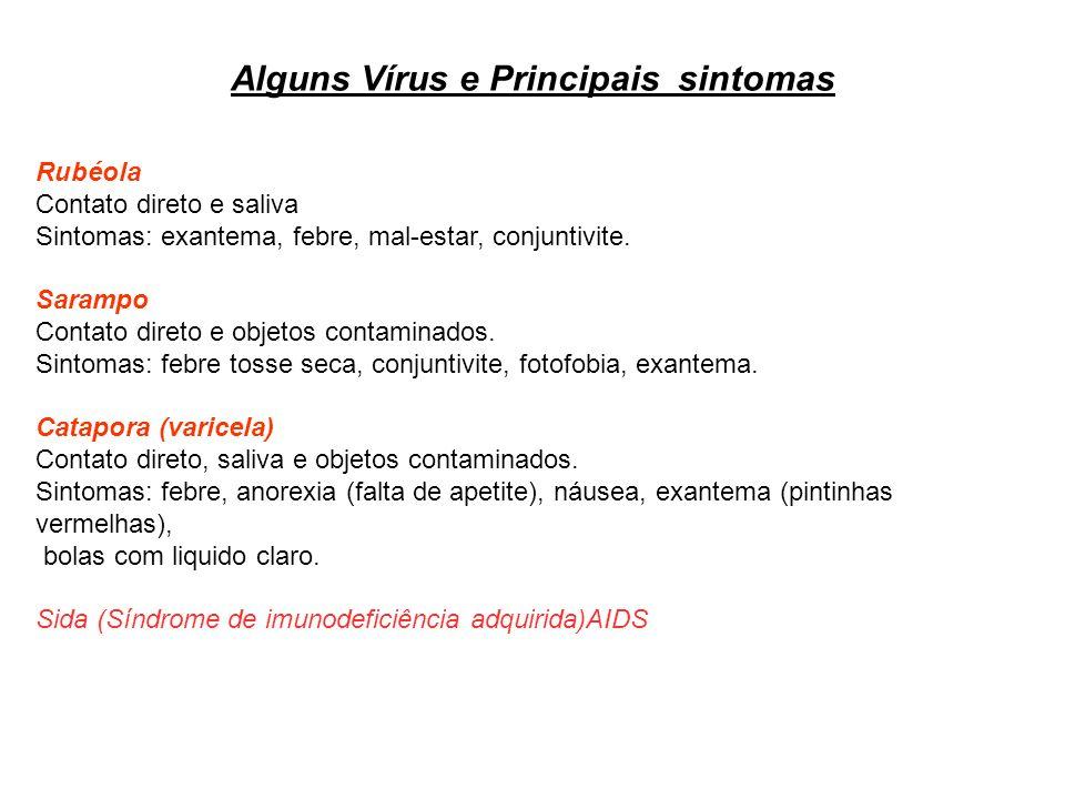 Alguns Vírus e Principais sintomas Rubéola Contato direto e saliva Sintomas: exantema, febre, mal-estar, conjuntivite. Sarampo Contato direto e objeto