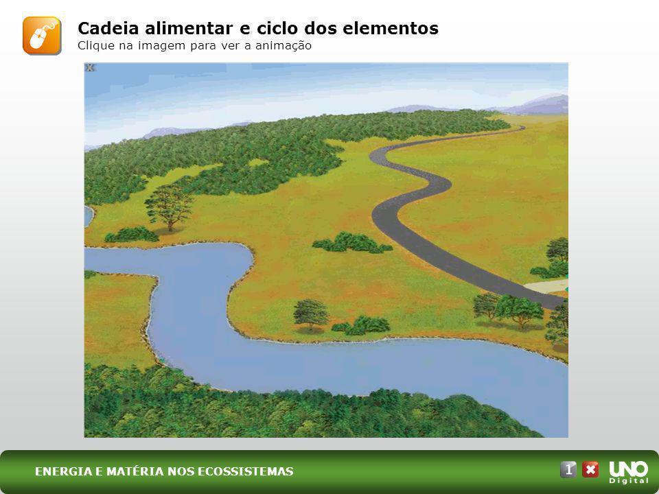 Cadeia alimentar e ciclo dos elementos Clique na imagem para ver a animação ENERGIA E MATÉRIA NOS ECOSSISTEMAS