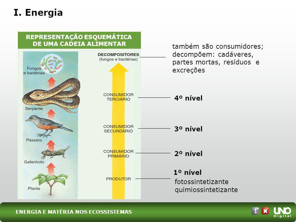 (UFMS) O esquema abaixo representa uma teia alimentar hipotética, simplificada, de organismos que ocorrem no Pantanal.