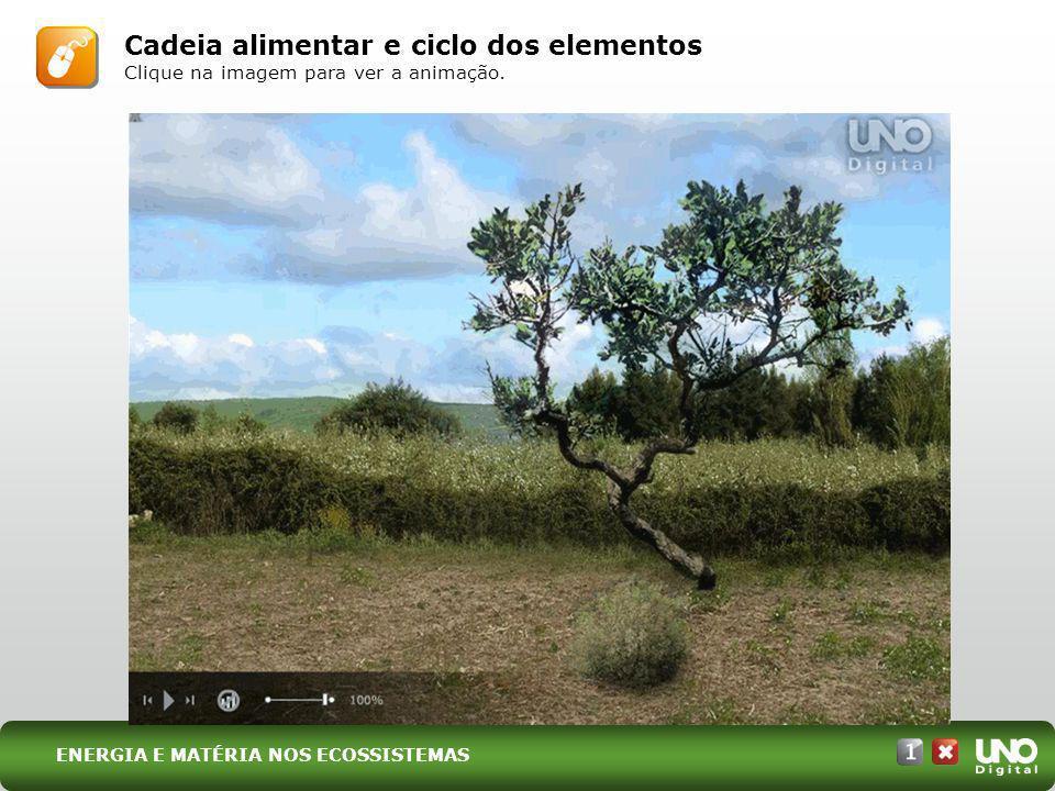 I. Energia ENERGIA E MATÉRIA NOS ECOSSISTEMAS EXEMPLO DE TEIA ALIMENTAR Representação sem escala