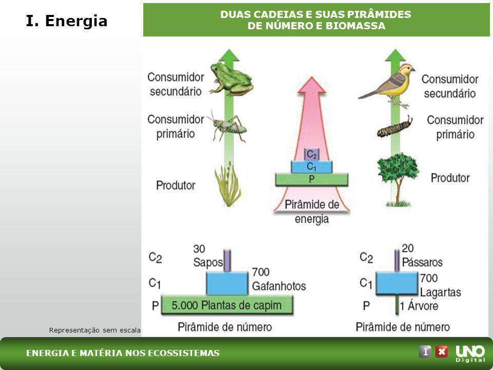 I. Energia DUAS CADEIAS E SUAS PIRÂMIDES DE NÚMERO E BIOMASSA Representação sem escala ENERGIA E MATÉRIA NOS ECOSSISTEMAS