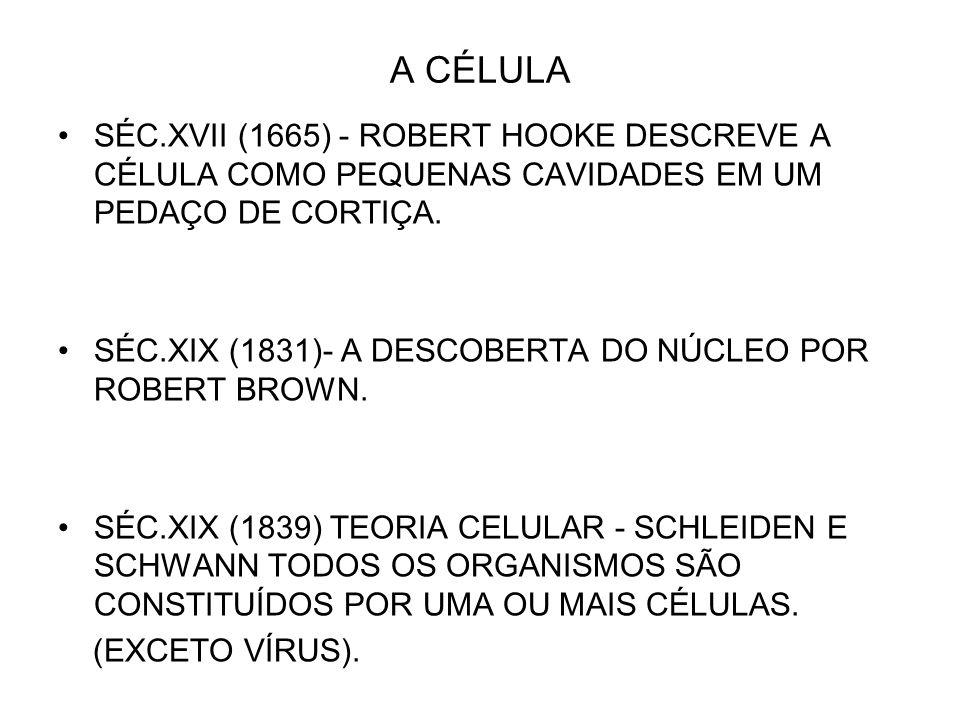 A CÉLULA SÉC.XVII (1665) - ROBERT HOOKE DESCREVE A CÉLULA COMO PEQUENAS CAVIDADES EM UM PEDAÇO DE CORTIÇA. SÉC.XIX (1831)- A DESCOBERTA DO NÚCLEO POR