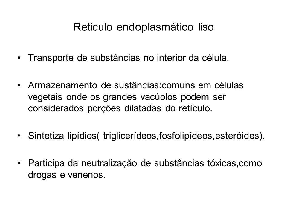 Reticulo endoplasmático liso Transporte de substâncias no interior da célula. Armazenamento de sustâncias:comuns em células vegetais onde os grandes v