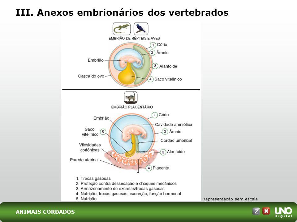 III. Anexos embrionários dos vertebrados Representação sem escala ANIMAIS CORDADOS