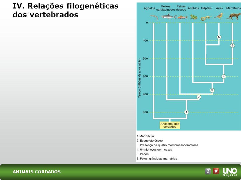 IV. Relações filogenéticas dos vertebrados ANIMAIS CORDADOS