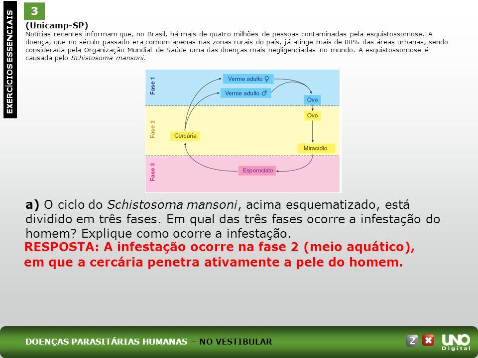 (Unicamp-SP) Notícias recentes informam que, no Brasil, há mais de quatro milhões de pessoas contaminadas pela esquistossomose.