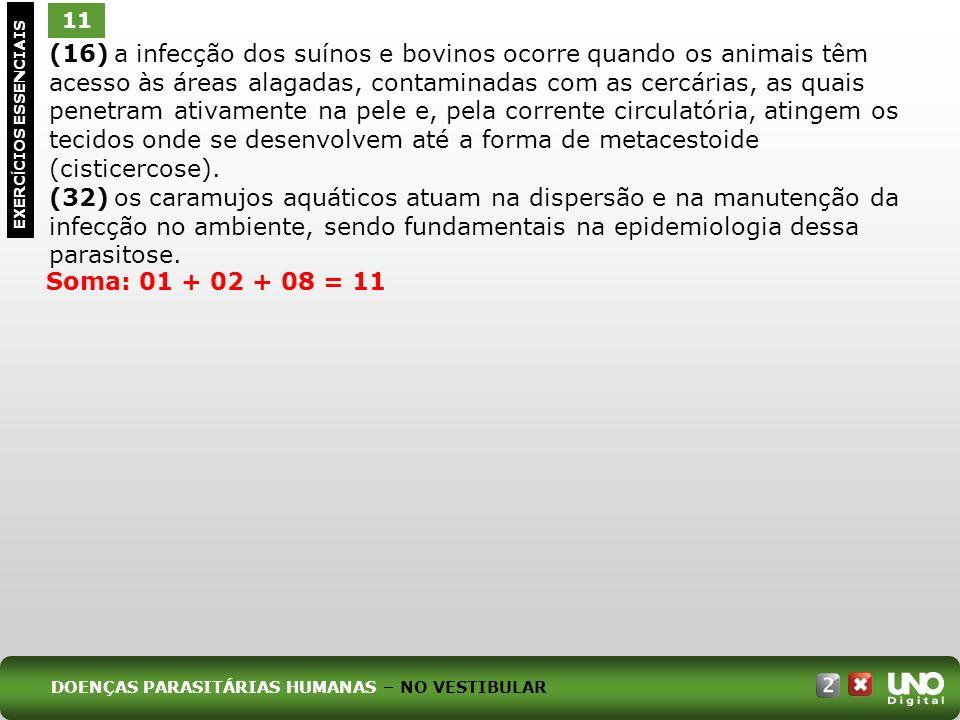 (16) a infecção dos suínos e bovinos ocorre quando os animais têm acesso às áreas alagadas, contaminadas com as cercárias, as quais penetram ativamente na pele e, pela corrente circulatória, atingem os tecidos onde se desenvolvem até a forma de metacestoide (cisticercose).