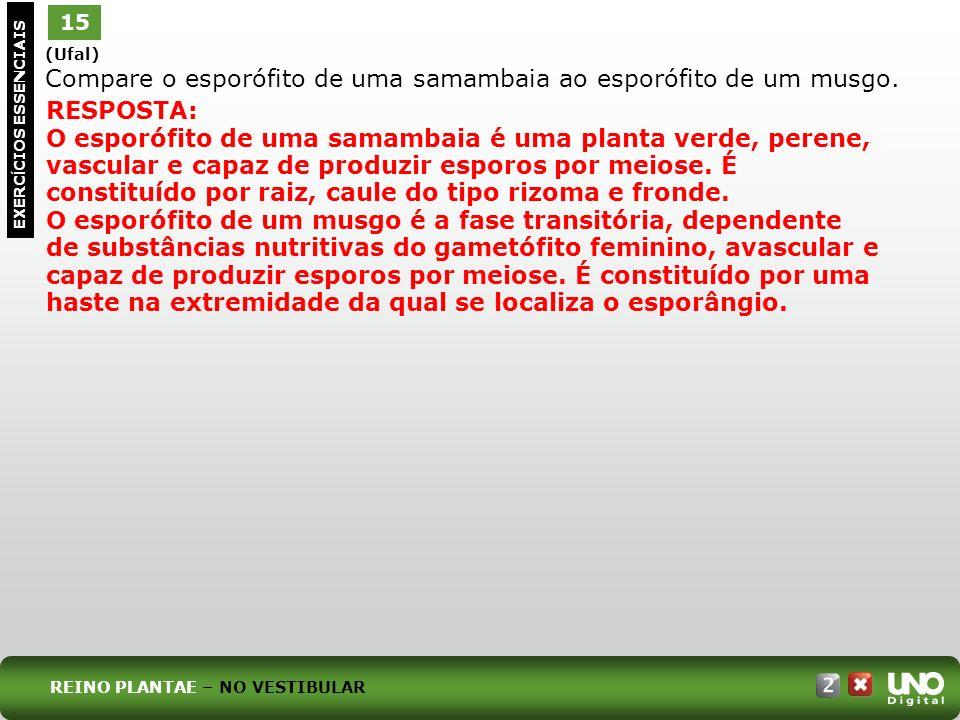 (Ufal) Compare o esporófito de uma samambaia ao esporófito de um musgo. 15 EXERC Í CIOS ESSENCIAIS RESPOSTA: O esporófito de uma samambaia é uma plant