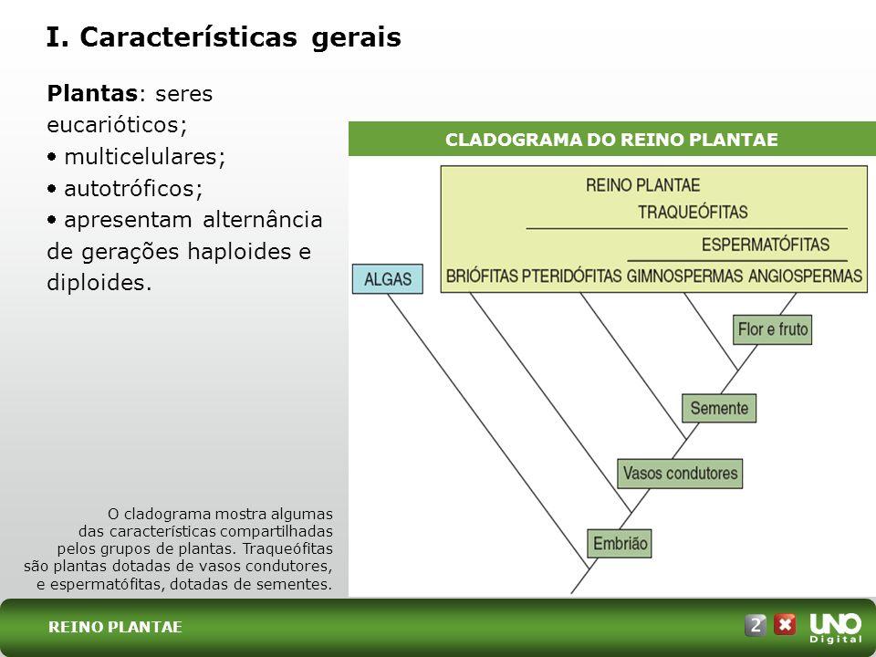 REINO PLANTAE Plantas: seres eucarióticos; multicelulares; autotróficos; apresentam alternância de gerações haploides e diploides. I. Características