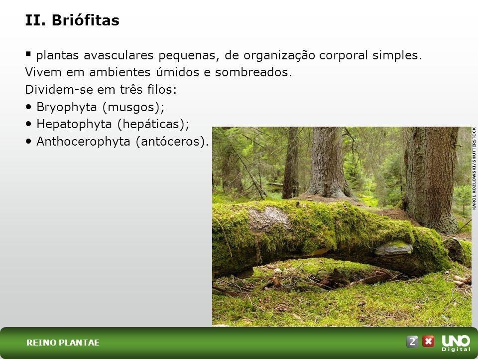 plantas avasculares pequenas, de organização corporal simples. Vivem em ambientes úmidos e sombreados. Dividem-se em três filos: Bryophyta (musgos); H