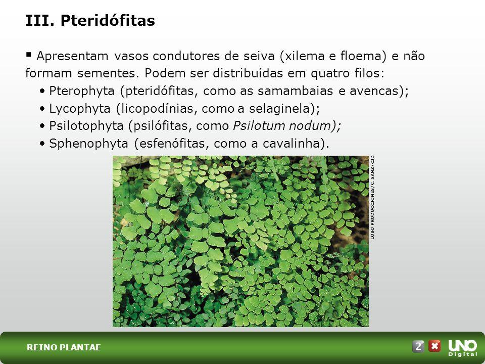 Apresentam vasos condutores de seiva (xilema e floema) e não formam sementes. Podem ser distribuídas em quatro filos: Pterophyta (pteridófitas, como a