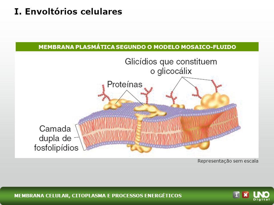 I. Envoltórios celulares MEMBRANA CELULAR, CITOPLASMA E PROCESSOS ENERGÉTICOS Representação sem escala MEMBRANA PLASMÁTICA SEGUNDO O MODELO MOSAICO-FL