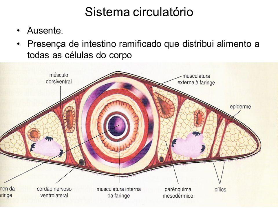 Sistema respiratório Ausente Trocas gasosas ocorrem diretamente entre a superfície do corpo e o ambiente.
