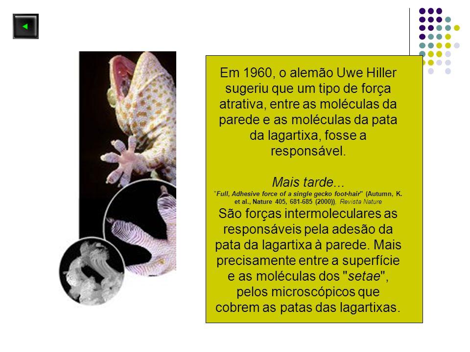 Em 1960, o alemão Uwe Hiller sugeriu que um tipo de força atrativa, entre as moléculas da parede e as moléculas da pata da lagartixa, fosse a responsá