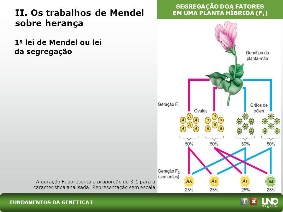 II. Os trabalhos de Mendel sobre herança 1 a lei de Mendel ou lei da segregação FUNDAMENTOS DA GENÉTICA I A geração F 2 apresenta a proporção de 3:1 p