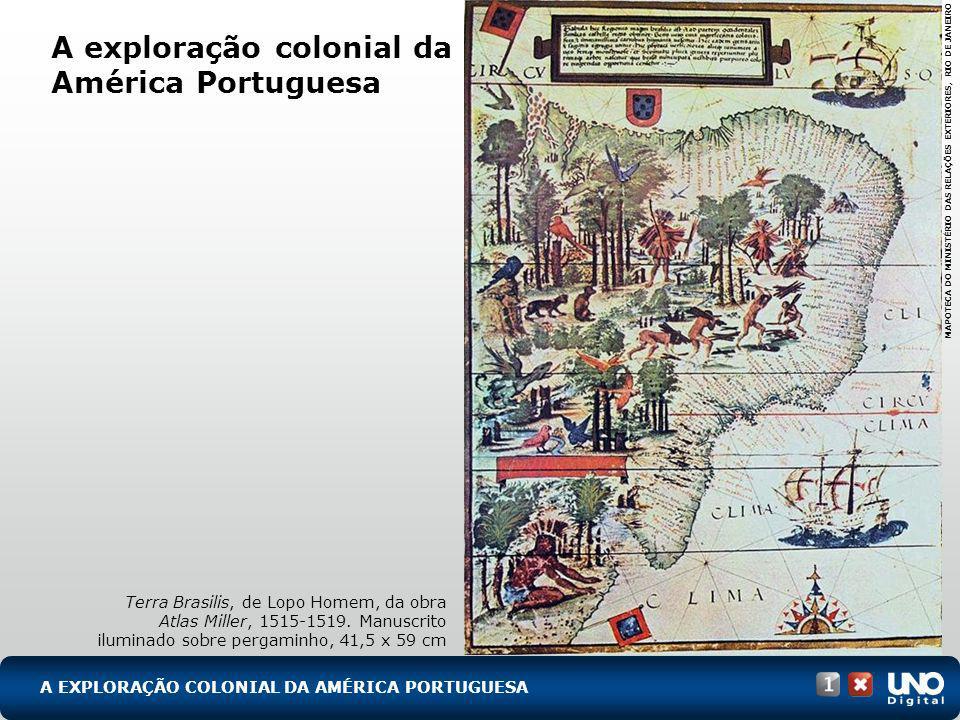 A exploração colonial da América Portuguesa Terra Brasilis, de Lopo Homem, da obra Atlas Miller, 1515-1519. Manuscrito iluminado sobre pergaminho, 41,