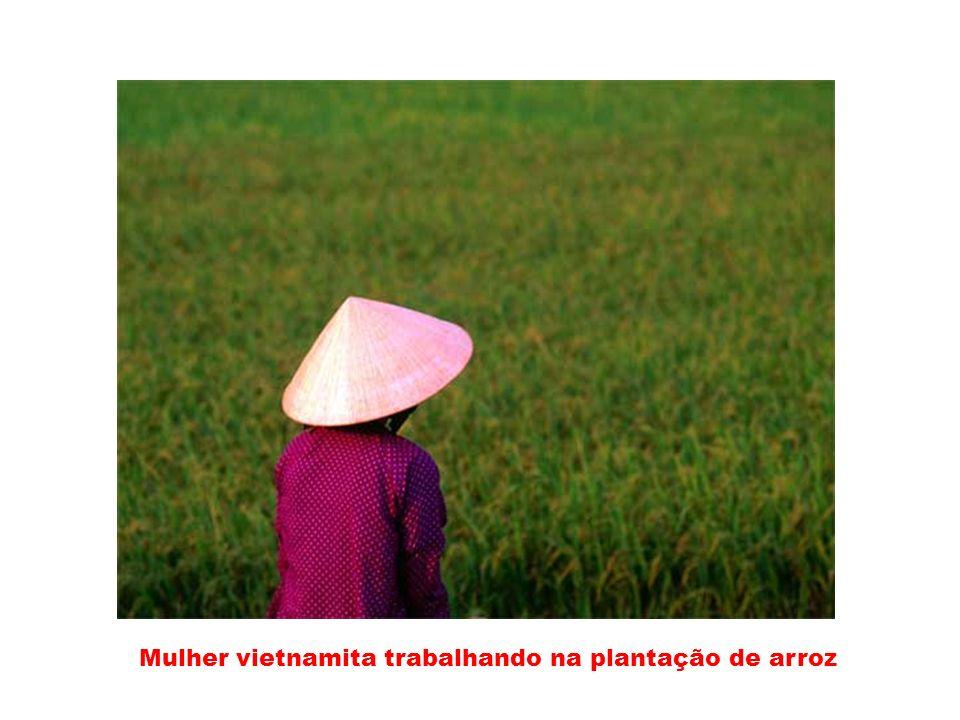 Mulher vietnamita trabalhando na plantação de arroz