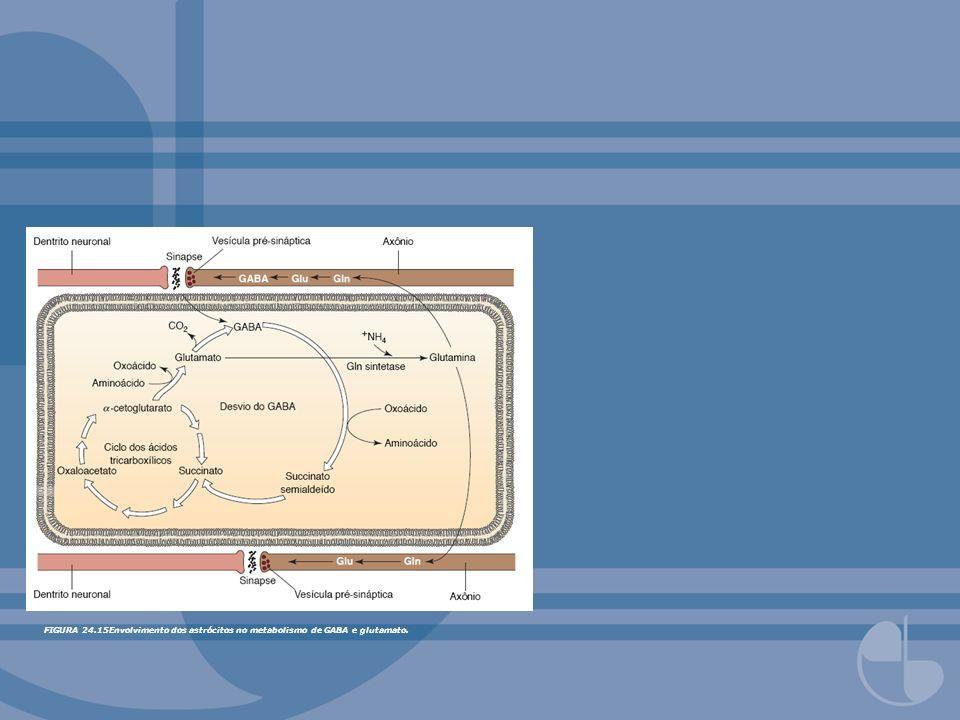 FIGURA 24.15Envolvimento dos astrócitos no metabolismo de GABA e glutamato.