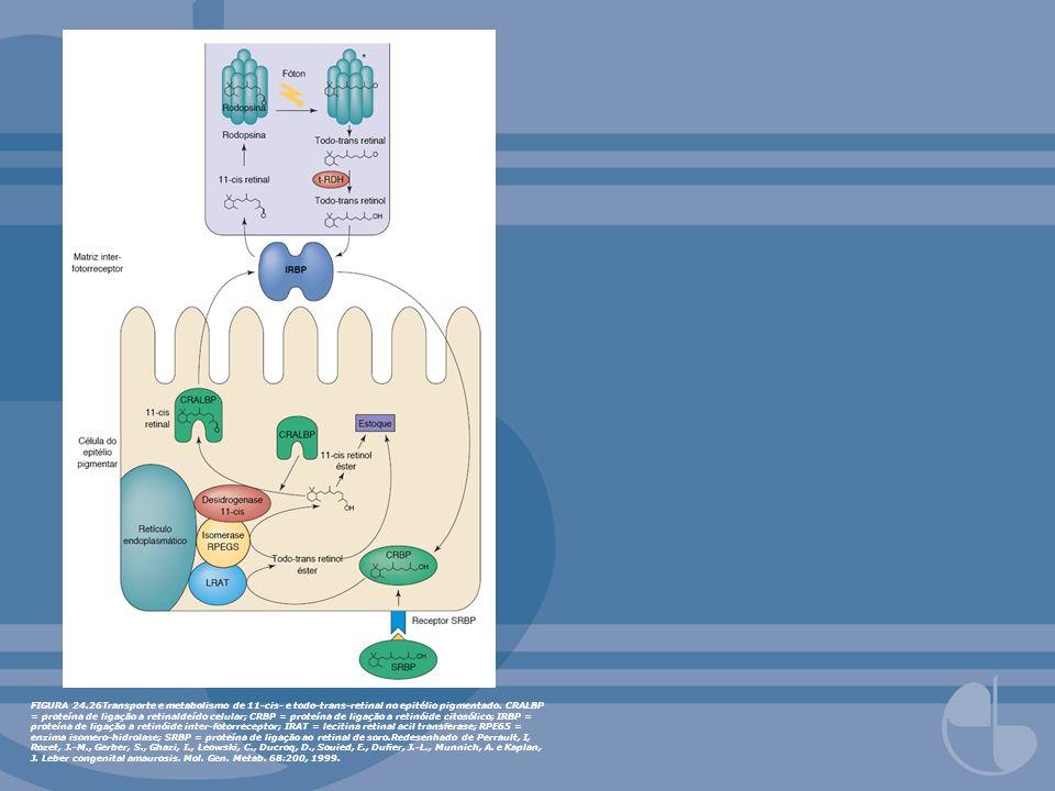 FIGURA 24.26Transporte e metabolismo de 11-cis- e todo-trans-retinal no epitélio pigmentado. CRALBP = proteína de ligação a retinaldeído celular; CRBP