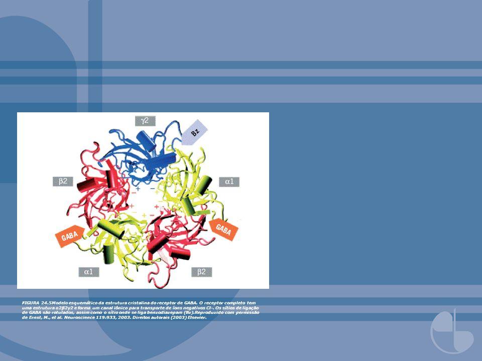 FIGURA 24.5Modelo esquemático da estrutura cristalina do receptor de GABA. O receptor completo tem uma estrutura α2β2γ2 e forma um canal iônico para t