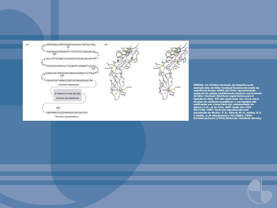 FIGURA 24.41Fator tecidual. (a) Seqüência de aminoácidos do fator tecidual humano derivado da seqüência do seu cDNA. (b) Uma representação espacial da