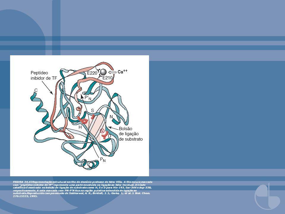 FIGURA 24.42Representação estrutural em ta do domínio protease do fator VIIa. A ta escura marcada com peptídeo inibidor de TF representa uma parte env