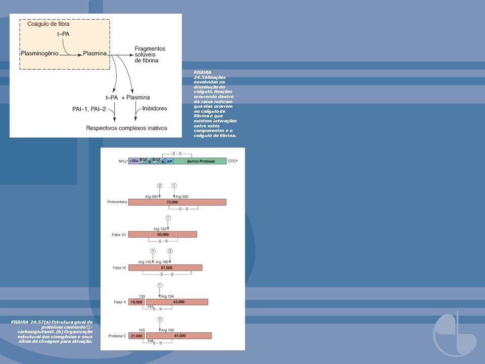 FIGURA 24.56Reações envolvidas na dissolução do coágulo. Reações ocorrendo dentro da caixa indicam que elas ocorrem no coágulo de brina e que existem