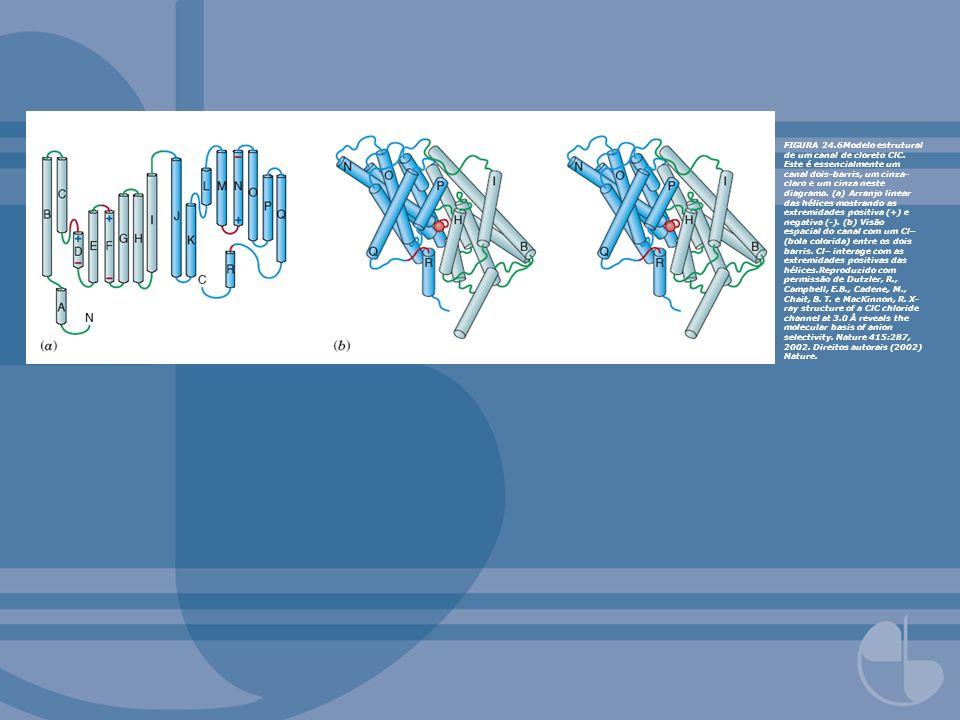 FIGURA 24.6Modelo estrutural de um canal de cloreto ClC. Este é essencialmente um canal dois-barris, um cinza- claro e um cinza neste diagrama. (a) Ar