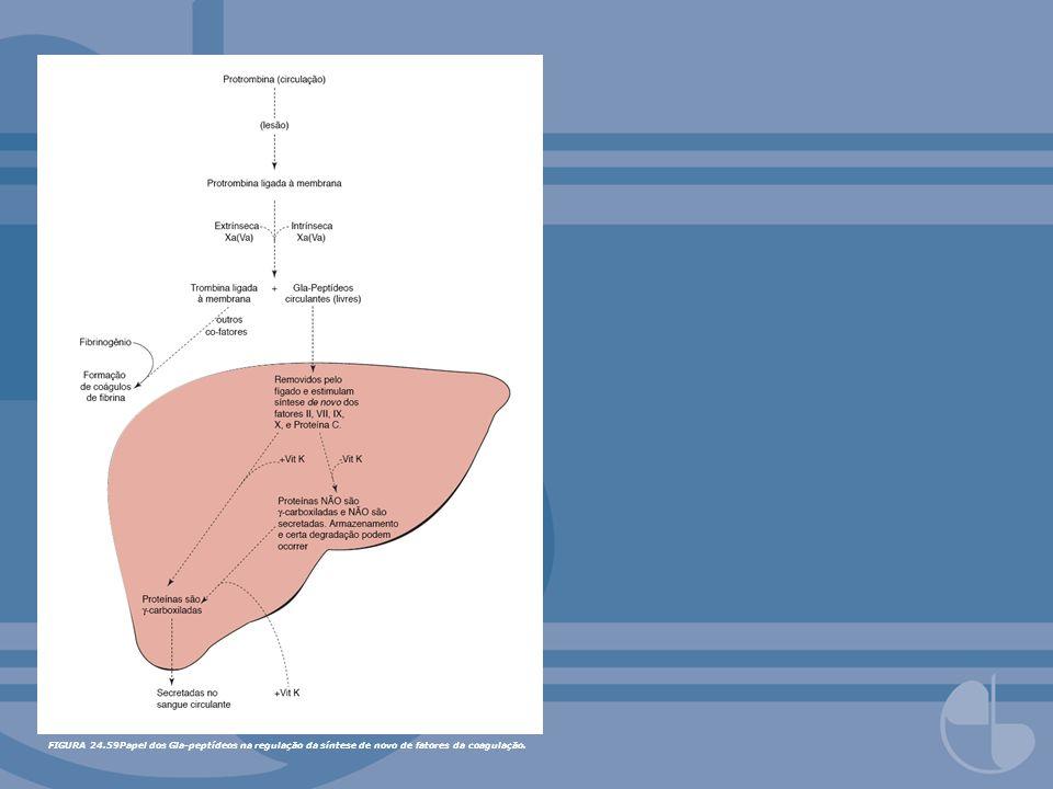 FIGURA 24.59Papel dos Gla-peptídeos na regulação da síntese de novo de fatores da coagulação.