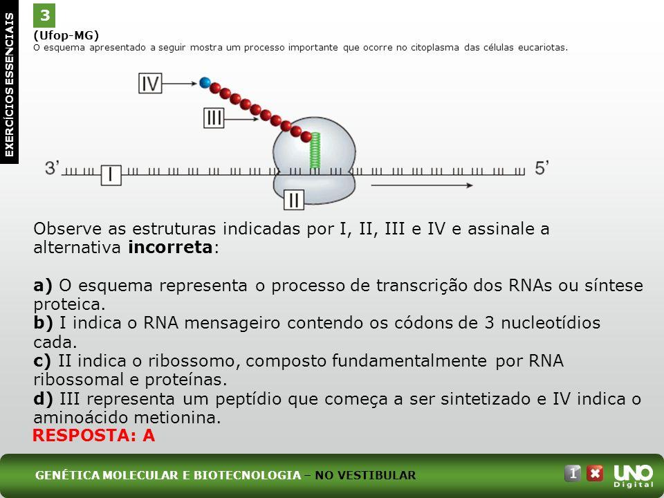(Ufop-MG) O esquema apresentado a seguir mostra um processo importante que ocorre no citoplasma das células eucariotas. Observe as estruturas indicada