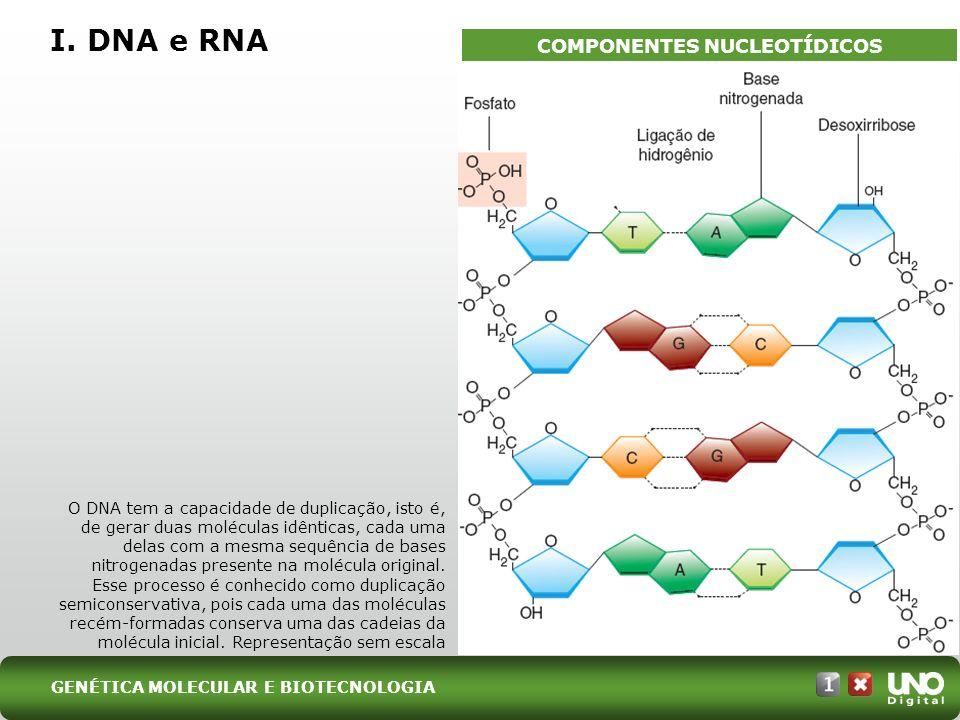 I. DNA e RNA GENÉTICA MOLECULAR E BIOTECNOLOGIA COMPONENTES NUCLEOTÍDICOS O DNA tem a capacidade de duplicação, isto é, de gerar duas moléculas idênti