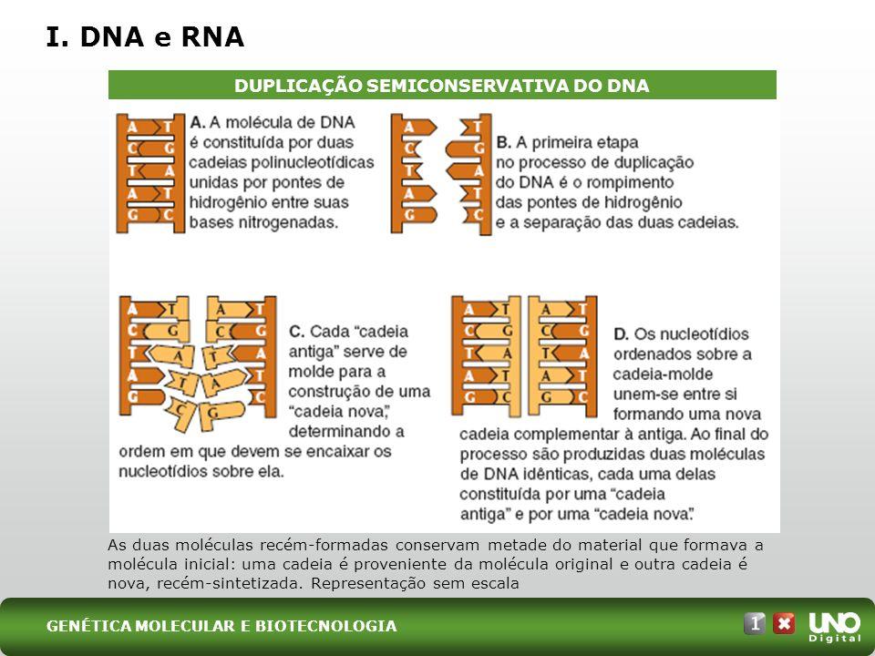 I. DNA e RNA DUPLICAÇÃO SEMICONSERVATIVA DO DNA As duas moléculas recém-formadas conservam metade do material que formava a molécula inicial: uma cade