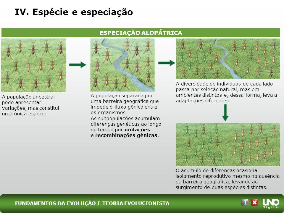 IV. Espécie e especiação ESPECIAÇÃO ALOPÁTRICA A população ancestral pode apresentar variações, mas constitui uma única espécie. A população separada