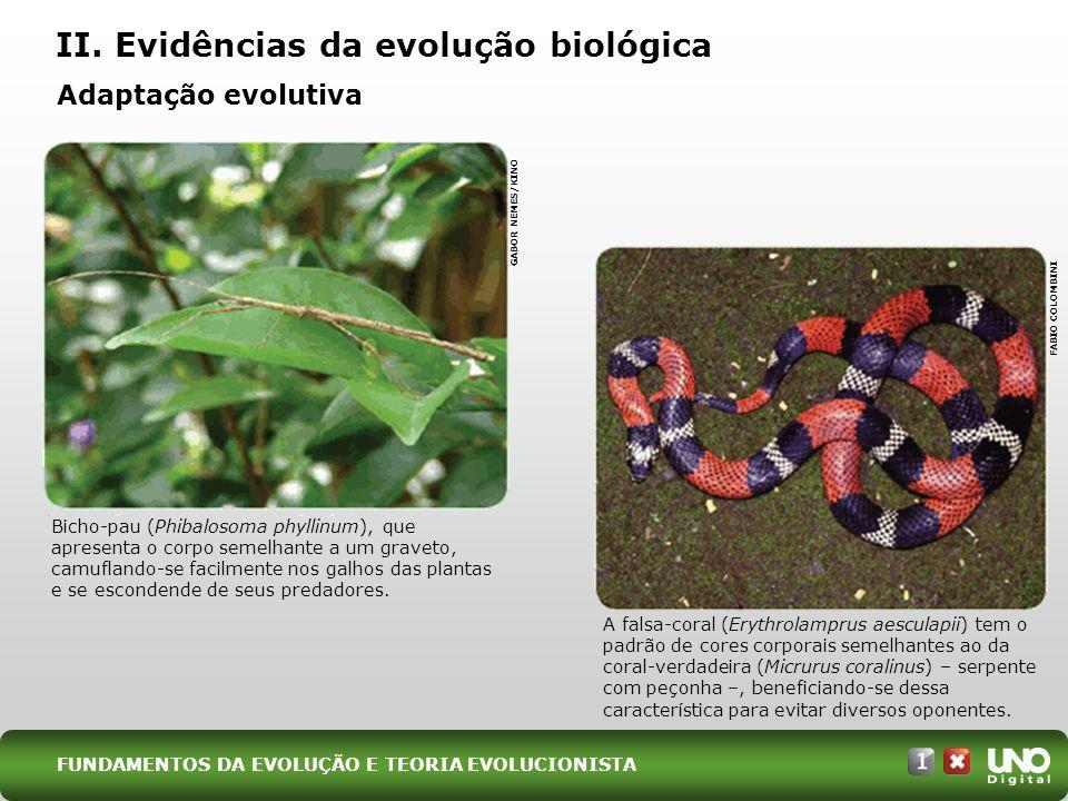 II. Evidências da evolução biológica GABOR NEMES/KINO FABIO COLOMBINI Adaptação evolutiva Bicho-pau (Phibalosoma phyllinum), que apresenta o corpo sem