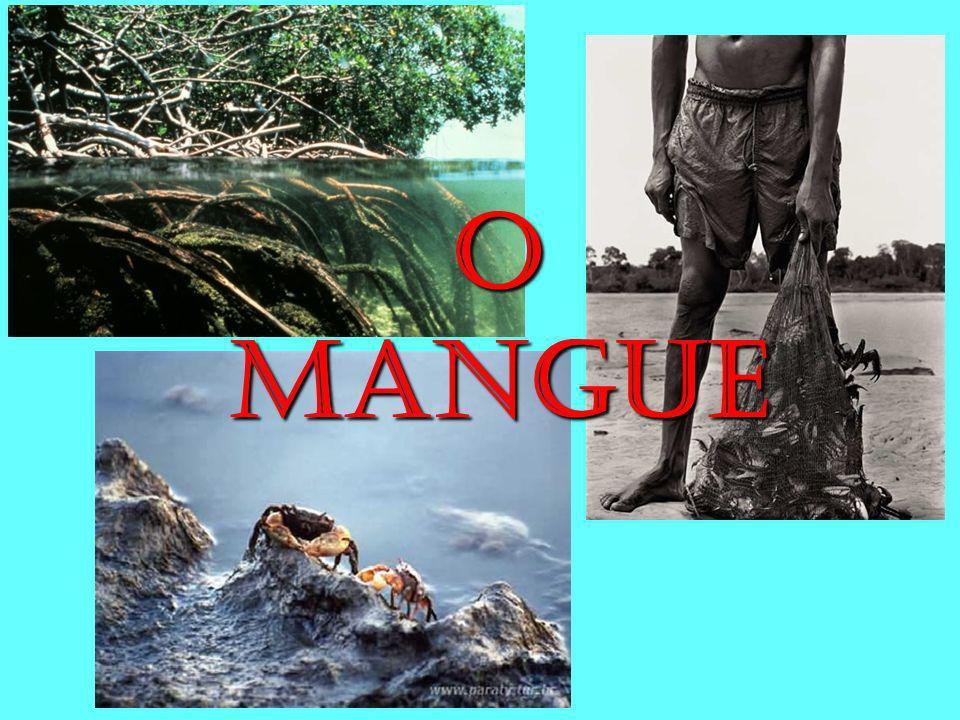 O MANGUE