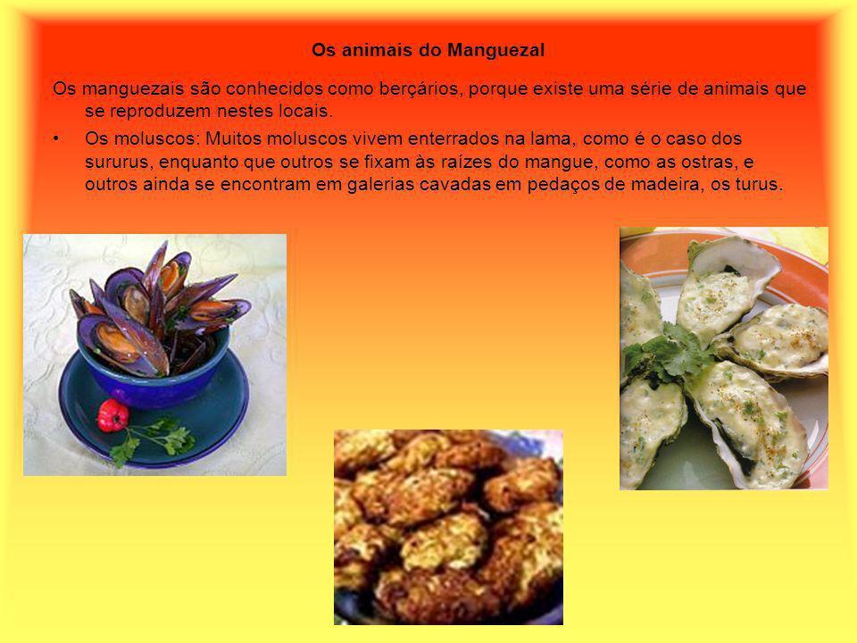 Os animais do Manguezal Os manguezais são conhecidos como berçários, porque existe uma série de animais que se reproduzem nestes locais. Os moluscos: