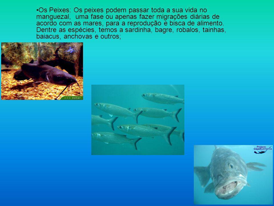 Os Peixes: Os peixes podem passar toda a sua vida no manguezal, uma fase ou apenas fazer migrações diárias de acordo com as mares, para a reprodução e