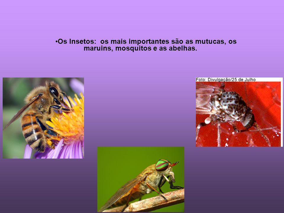 Os Insetos: os mais importantes são as mutucas, os maruins, mosquitos e as abelhas.